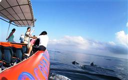 DOLPHIN TOUR IN THE SOUTH OF BALI