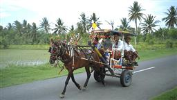 LOMBOK TOUR ON A CIDOMO CARRIAGE
